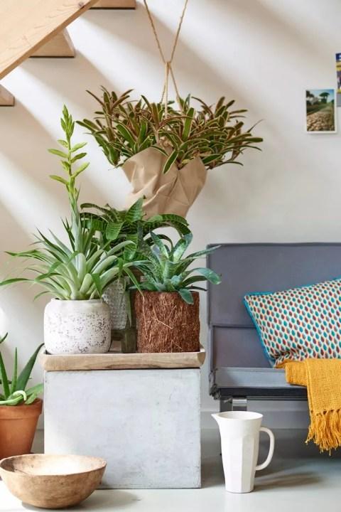 Groen wonen | Interieur in exotische sfeer met de Bromelia - Woonblog StijlvolStyling.com