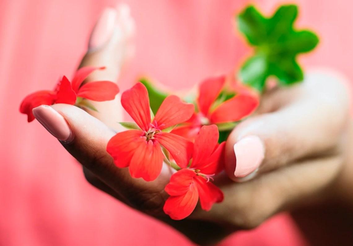 Buitenleven | Geranium (Pelargonium) = Balkonplant van het Jaar 2016 - Woonblog StijlvolStyling.com