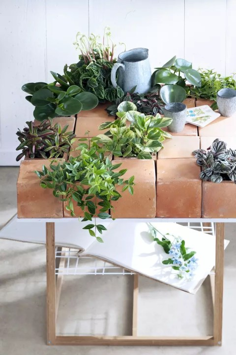 Groen wonen | Pittige Peperomia in de mix - Woonblog StijlvolStyling.com (Peperomia plant)