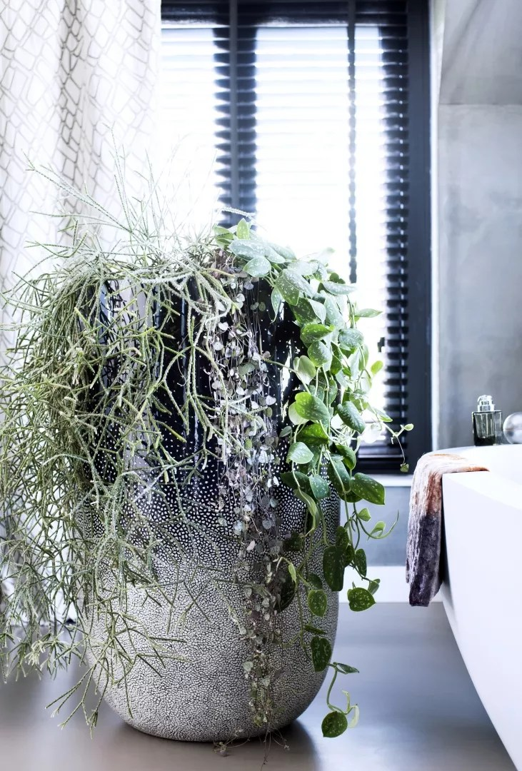 Groen wonen   Hangplanten als woontrend - Woonblog StijlvolStyling.com
