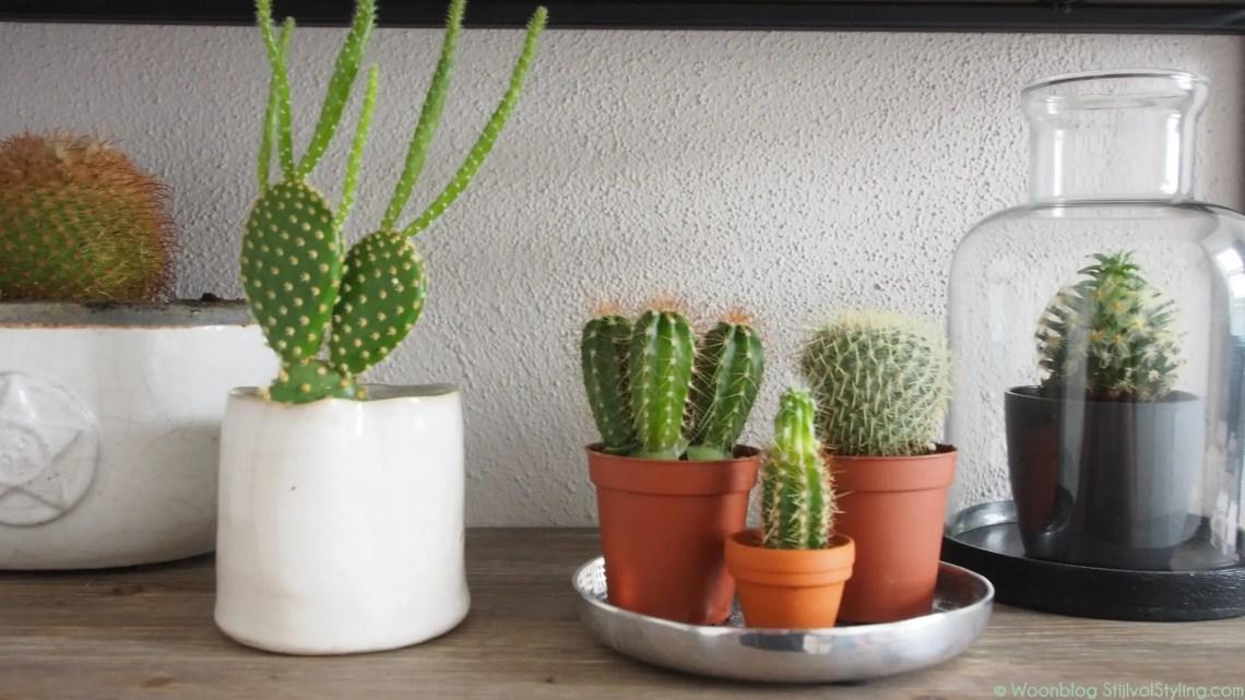 Groen wonen | Prikkelend zomergevoel met de Cactus - Woonblog StijlvolStyling.com