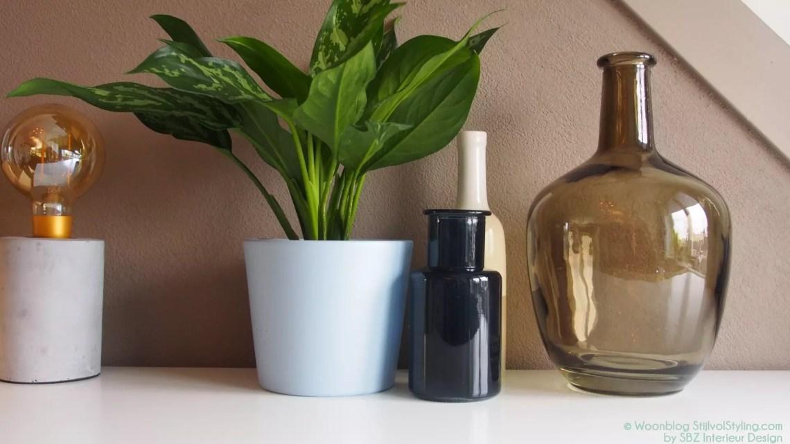 Groen wonen | Eerste hulp tips bij planten verzorgen en plant problemen | Woonblog StijlvolStyling.com