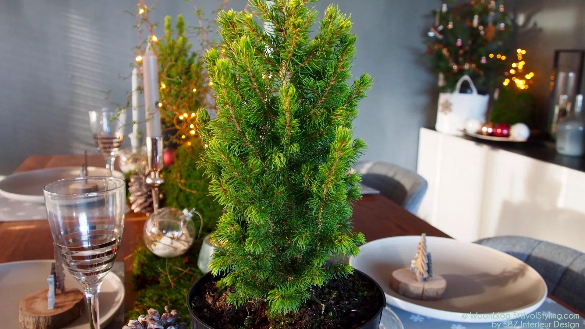 Feestdagen Natuurlijke Kerstdecoratie : Feestdagen natuurlijke feest of kersttafel decoratie met mos