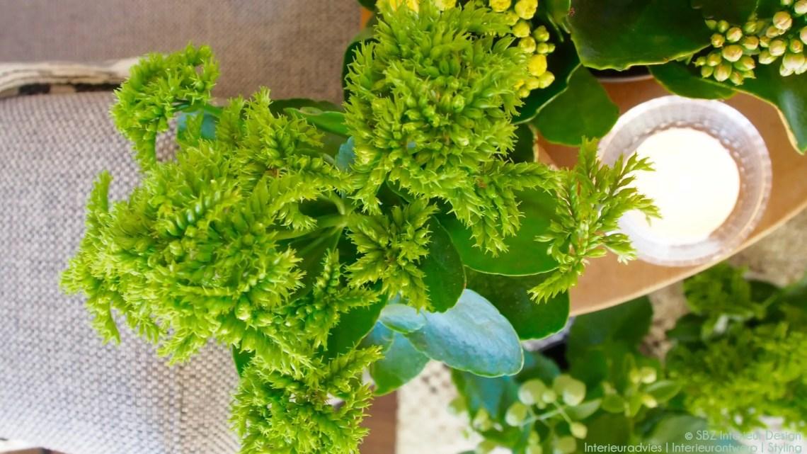 Groen wonen | 'Green oldie' Kalanchoë brengt sfeer - Woonblog StijlvolStyling.com