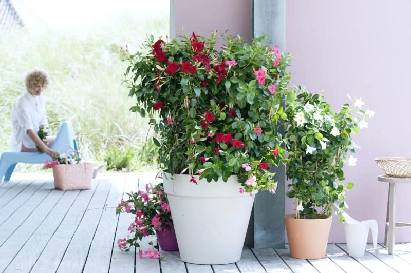 Buitenleven | Mandeville - bloemenzee tot ver in het najaar - Woonblog StijlvolStyling.com