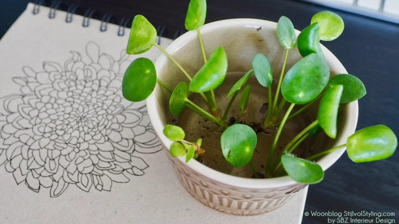 Groen wonen   Do it yourself - Pilea stekken - Woonblog StijlvolStyling.com