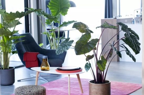 Groen wonen | Alocasia - Retro Olifantsoor weer hip! - Woonblog StijlvolStyling.com