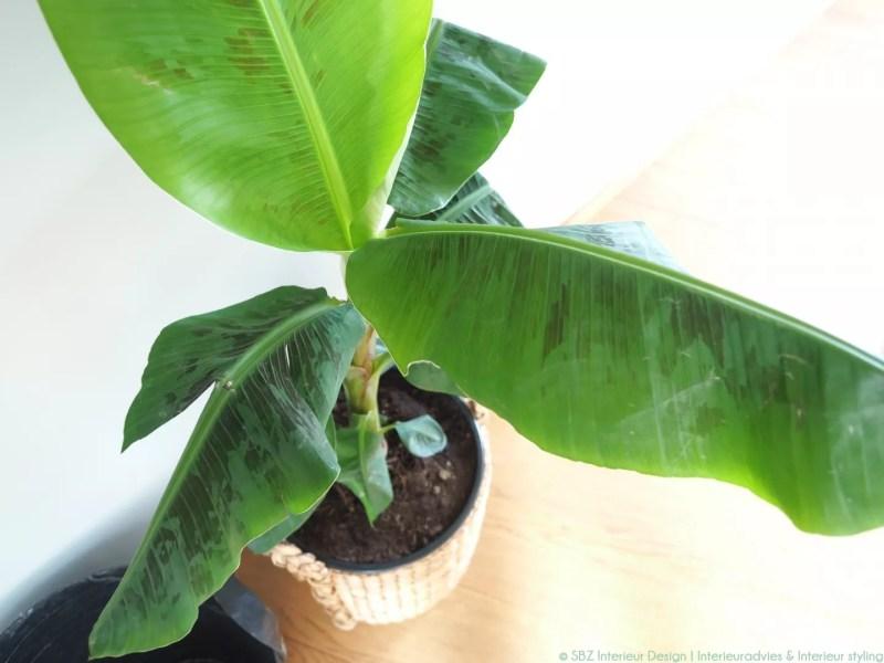 Interieur trend nr.1 Een frisse start met groen en planten (sneak preview) | Woonblog StijlvolStyling.com