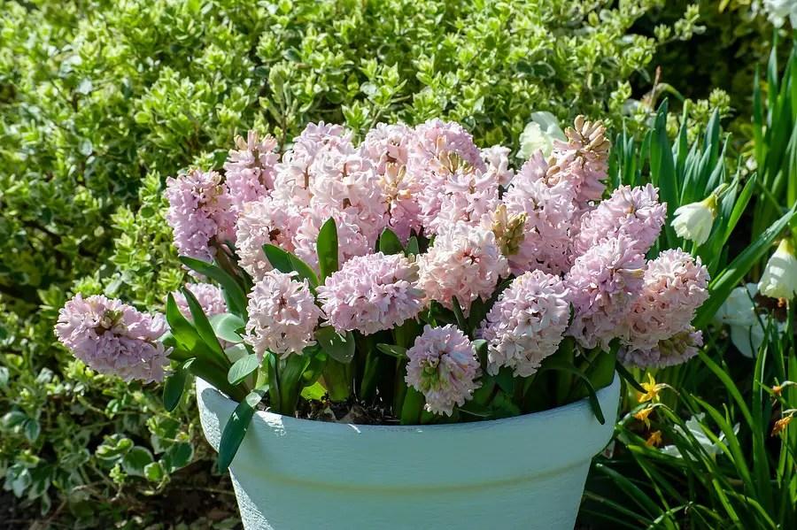 Tuin inspiratie | Bollen-op-pot; blij makers pur sang - woonblog StijlvolStyling.com door SBZ Interieur Design (photo credits: iBulb)