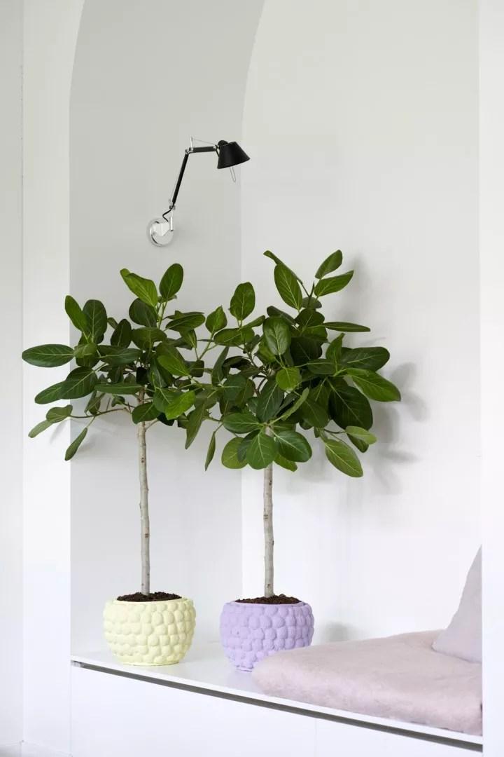 Calathea - Woonblog StijlvolStyling.com - foto credits: mooiwatplantendoen
