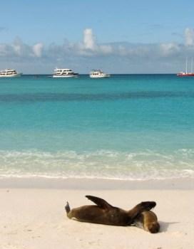stranddeeljemetdezeeleeuwen