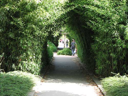 A walk in la Coulée Verte in Paris