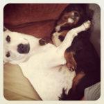 #YOLOmondays Link-Up & The Dogs