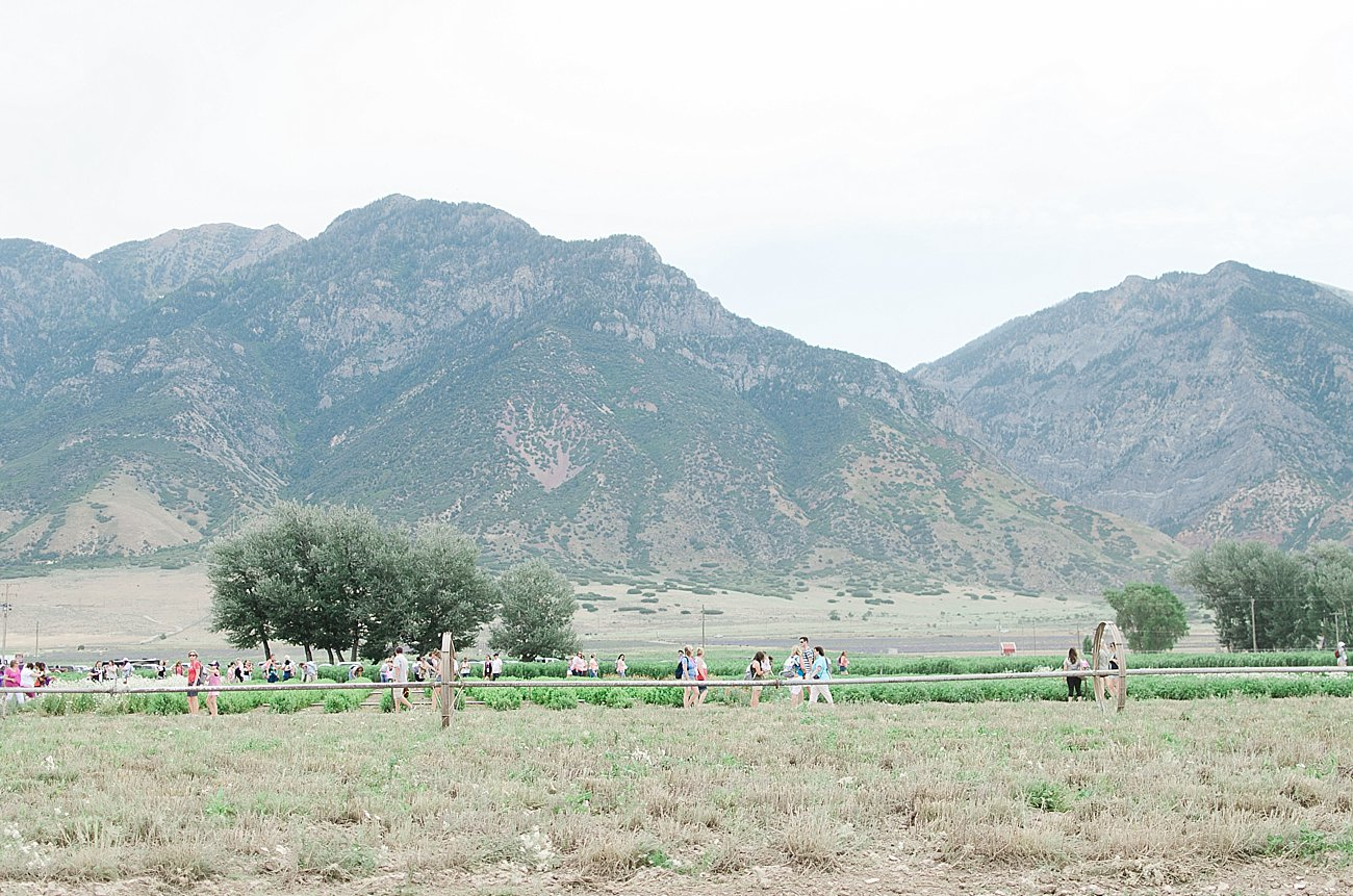 Young Living Lavender Farm, Mona, Utah (42)