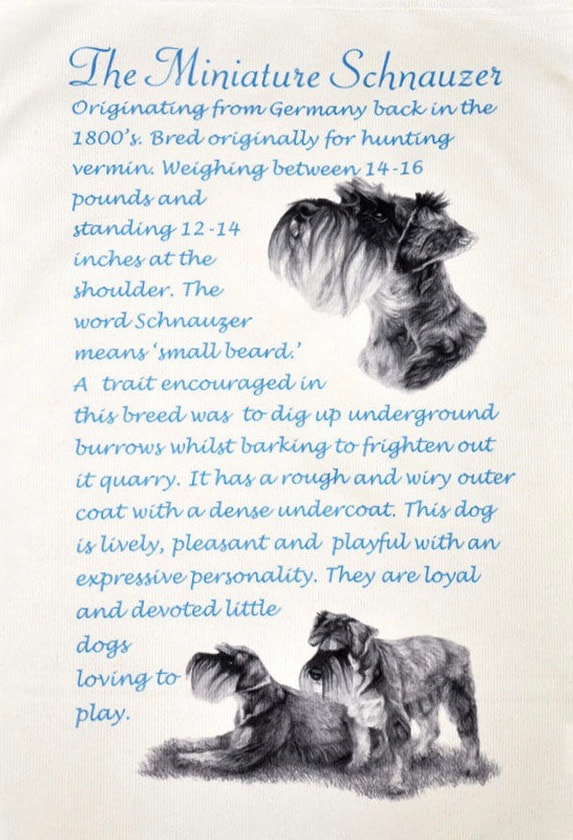 Pet Grooming Resume Sample