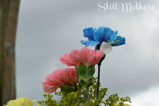 pink and blue carnations