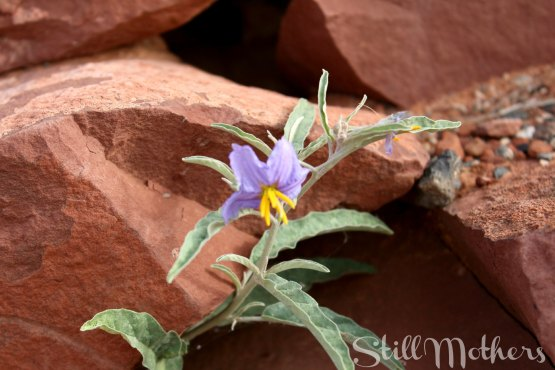strong rocks, purple flower