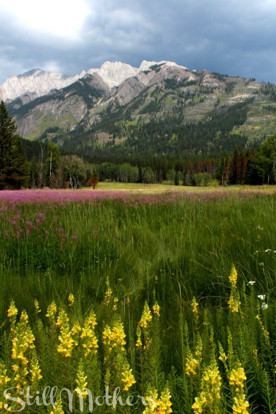 Rocky Mountain, storm cloud, wildflowers