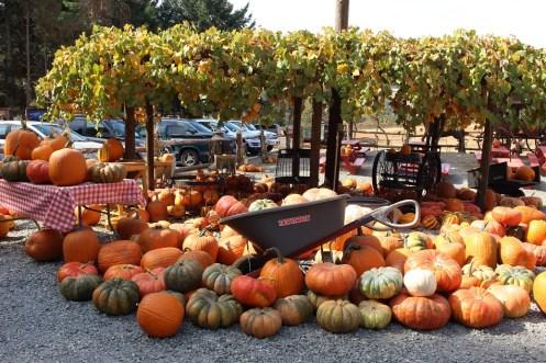 pumpkins_950