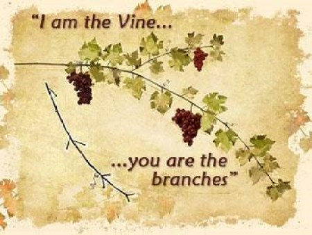 Jesus In Scripture I Am The Vine You Are The Branches