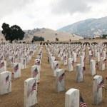 [커뮤니티] USNDC 제8사단 의무여단, 베이커스필드 국립묘지에 5,700송이 헌화