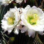 미국 서부지역 자연 100배 즐기기 (9)  Los Angeles Arboretum