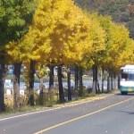 [시] 다시 가을이 와서 / 석정희
