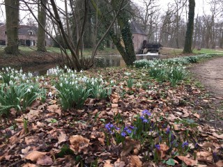 Squills and Snowdrops at Hackfort. Photo Stinze Stiens.