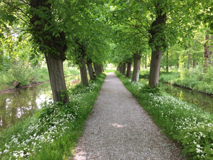 Lime-tree lane with Double Meadow Saxifrage at Martenastate. Photo: Stinze Stiens.