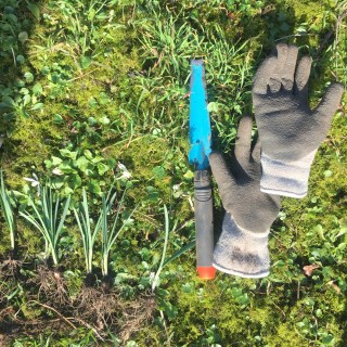 Replanting Snowdrops at Stinze Stiens.