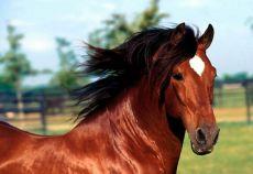Chiar dacă sunt rezistenți, și caii au nevoie de grija stăpânilor lor. Spre exemplu, în zilele fierbinți de vară, caii au nevoie să fie în permanență lângă o sursă de apă și să se poată adăposti la umbră.