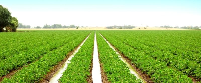 Consumul de apa in agricultura a scazut drastic