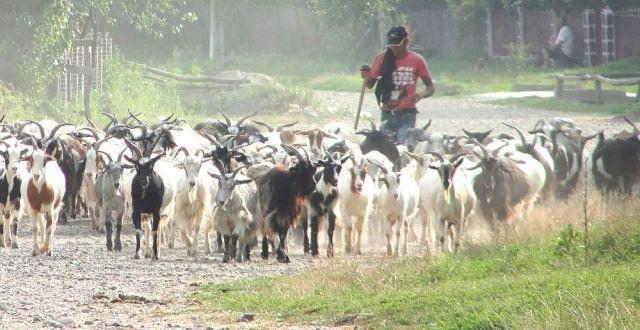 La solicitarea scrisă a fermierului, APIA va elibera o Adeverinţă de înregistrare a fermierului
