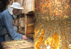 program national apicol
