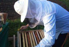 apicultorul Toma Dinu Ionita