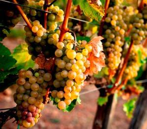 struguri-vin