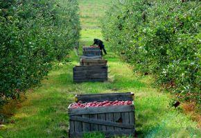 fonduri europene pentru pomicultura