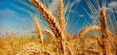 grau-agricultura