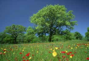 plati de agro mediu