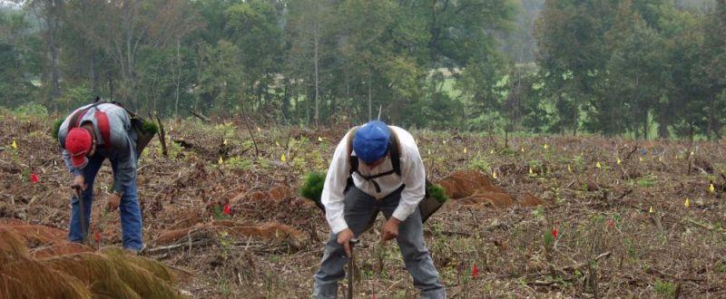 pndr silvicultura