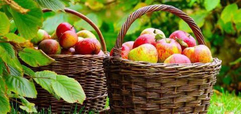 fructe in scoli