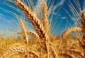 grau-agricultura-617x330