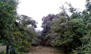 vand-prune-poroabe