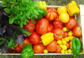 solarii robert popescu legume3