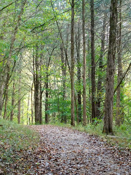 Newman_path