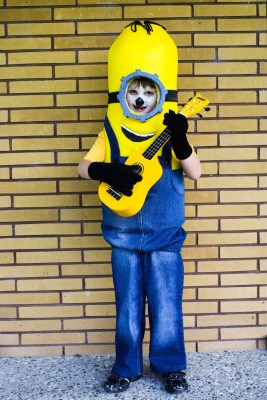 Halloween 2016 Costumes - Cosplay - Costume party - stitchremedy.com - making the minion