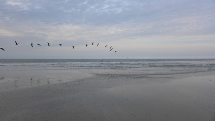 Pelicans, Oregon Inlet Beach, NC