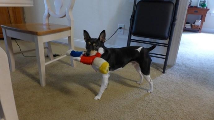 Finn, favorite toy Mr. Bill