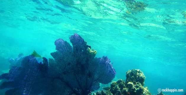 snorkeling-stjohn