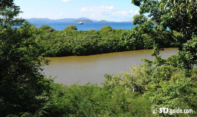 francis-bay-trail-stjohn-salt-pond